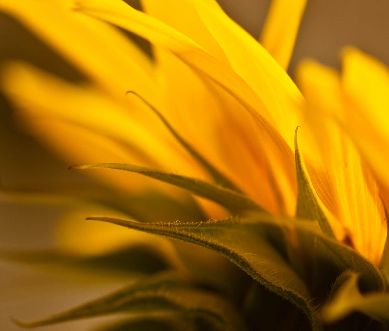 sundrenched-Alan-Ranger-Photography.jpg