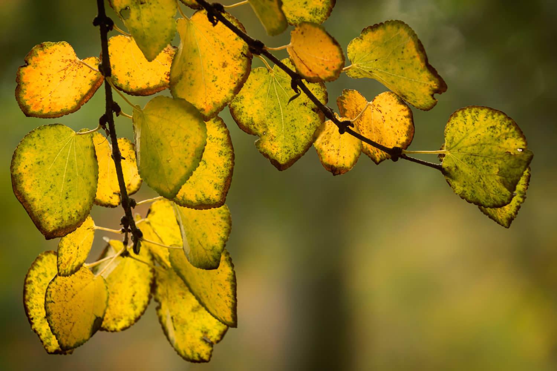 Batsford Colour