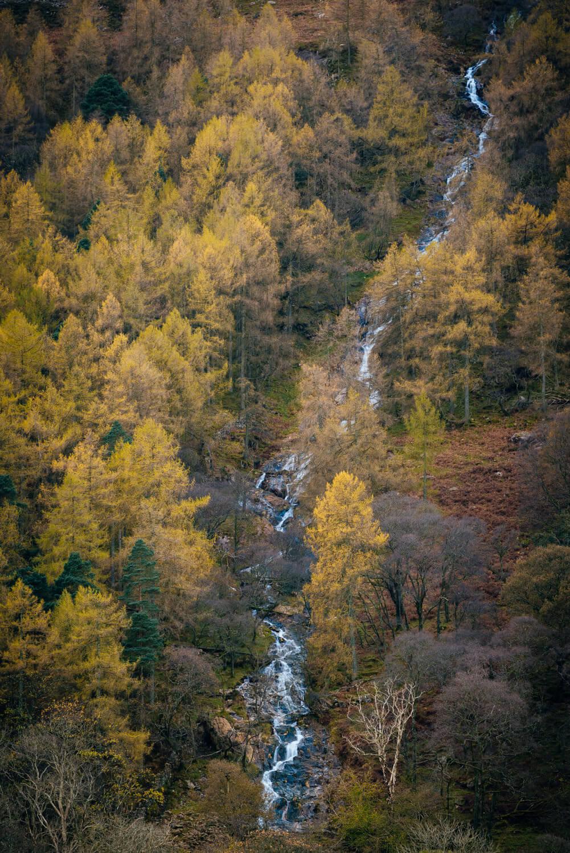 Buttermere Larch-Alan-Ranger-Photography.jpg