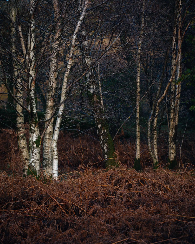 crummock wood-Alan-Ranger-Photography.jpg