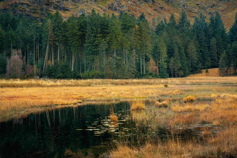 Harrop Tarn-Alan-Ranger-Photography.jpg