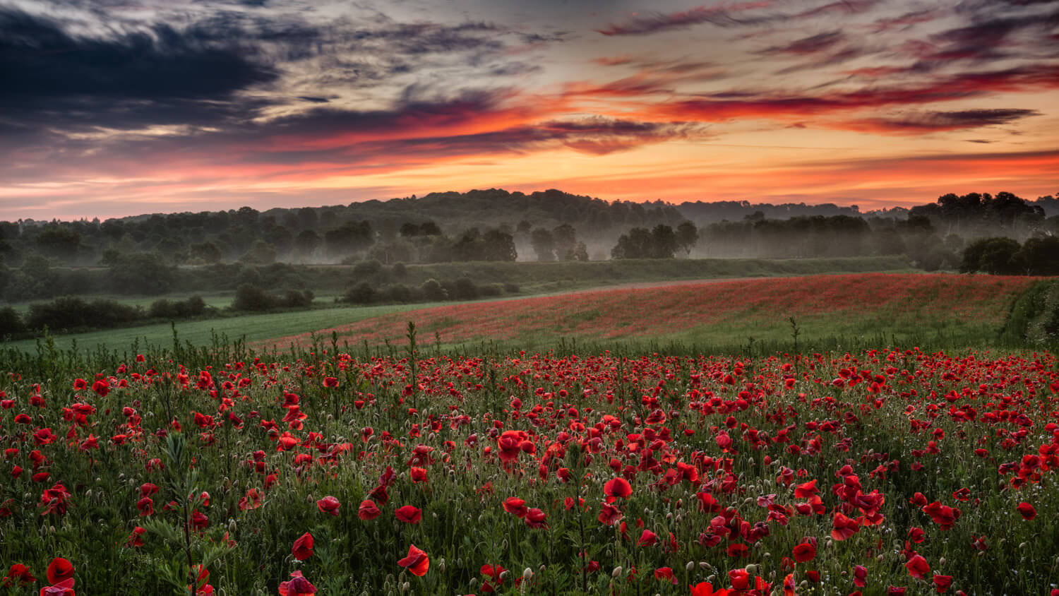 Click on image to see more example shots from the poppy field photography workshops