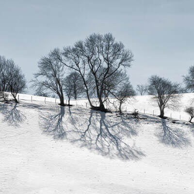 Tree Shadows-Photography-Workshops.jpg