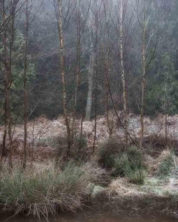 Hay Woods - 1-Alan-Ranger-Photography.jpg