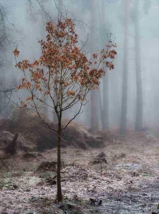 Hay Woods - 5-Alan-Ranger-Photography.jpg
