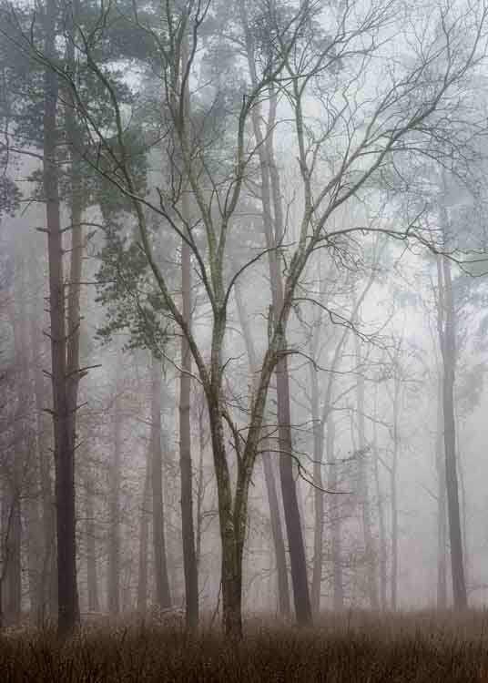 Hay Woods Split-Alan-Ranger-Photography.jpg