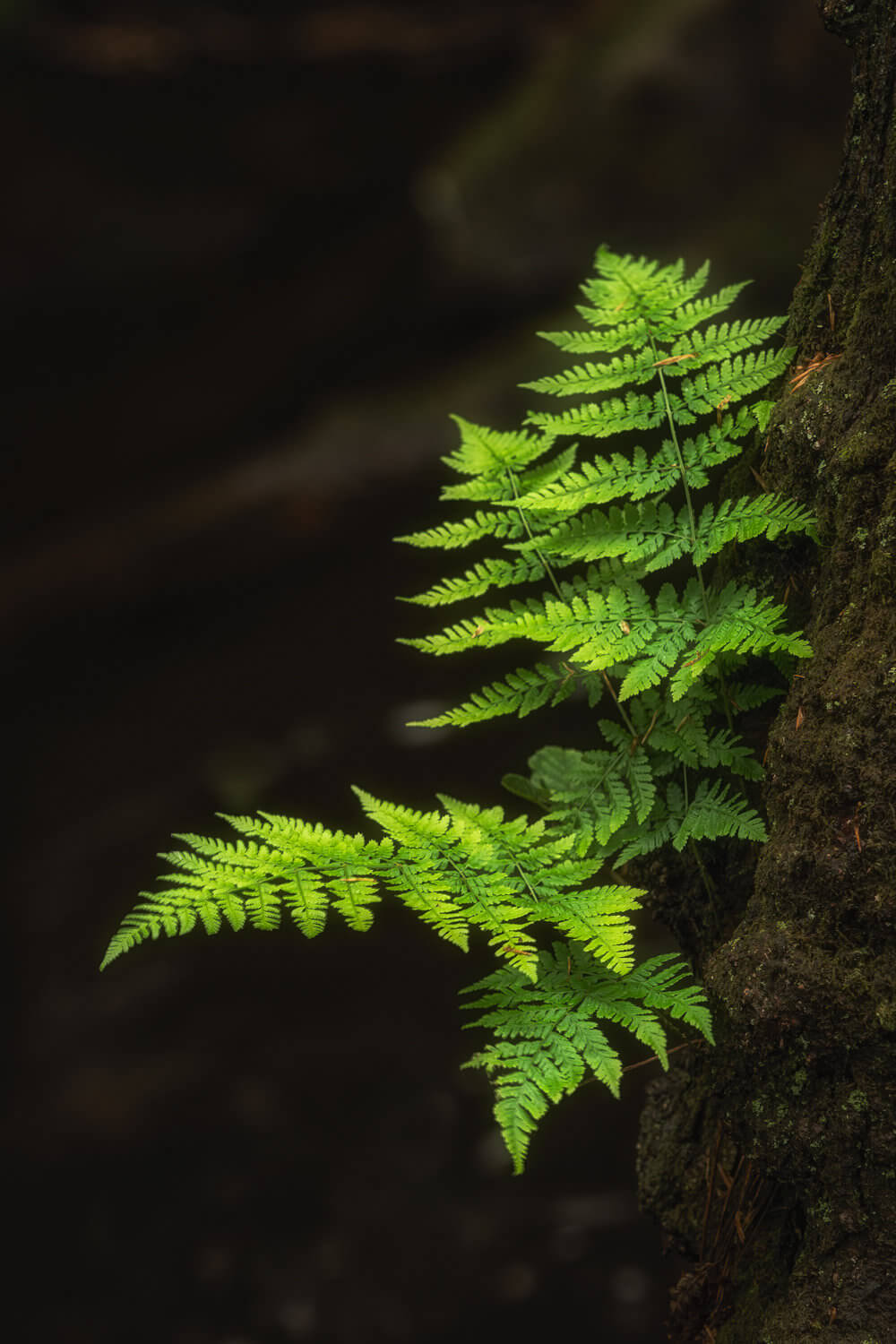 fern-Alan-Ranger-Photography.jpg
