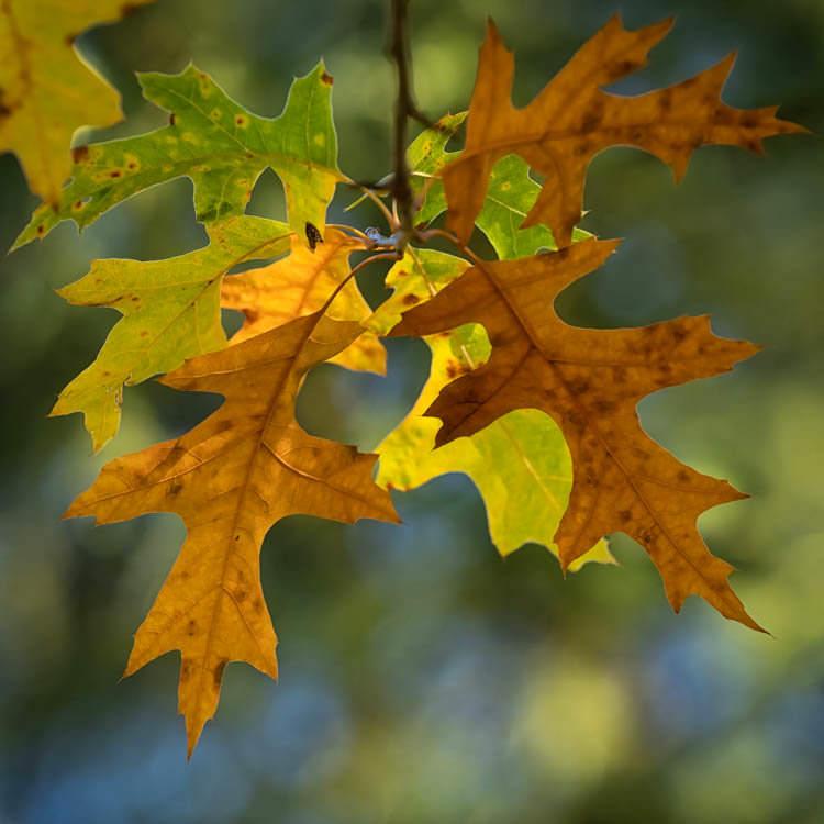 Autumn Leaves Photo Contest