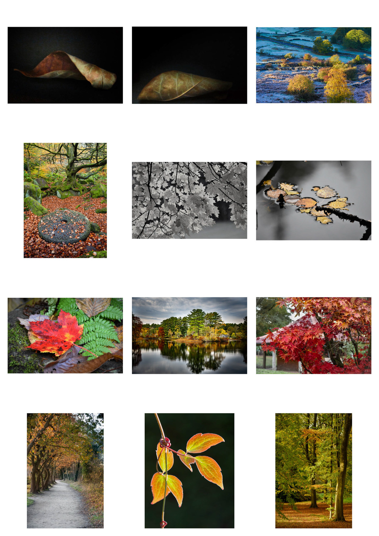 Entries - Autumn Leaves