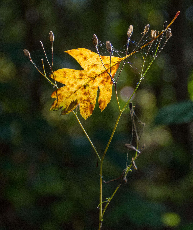 Robert Hull - Runner-up - Autumn Leaves