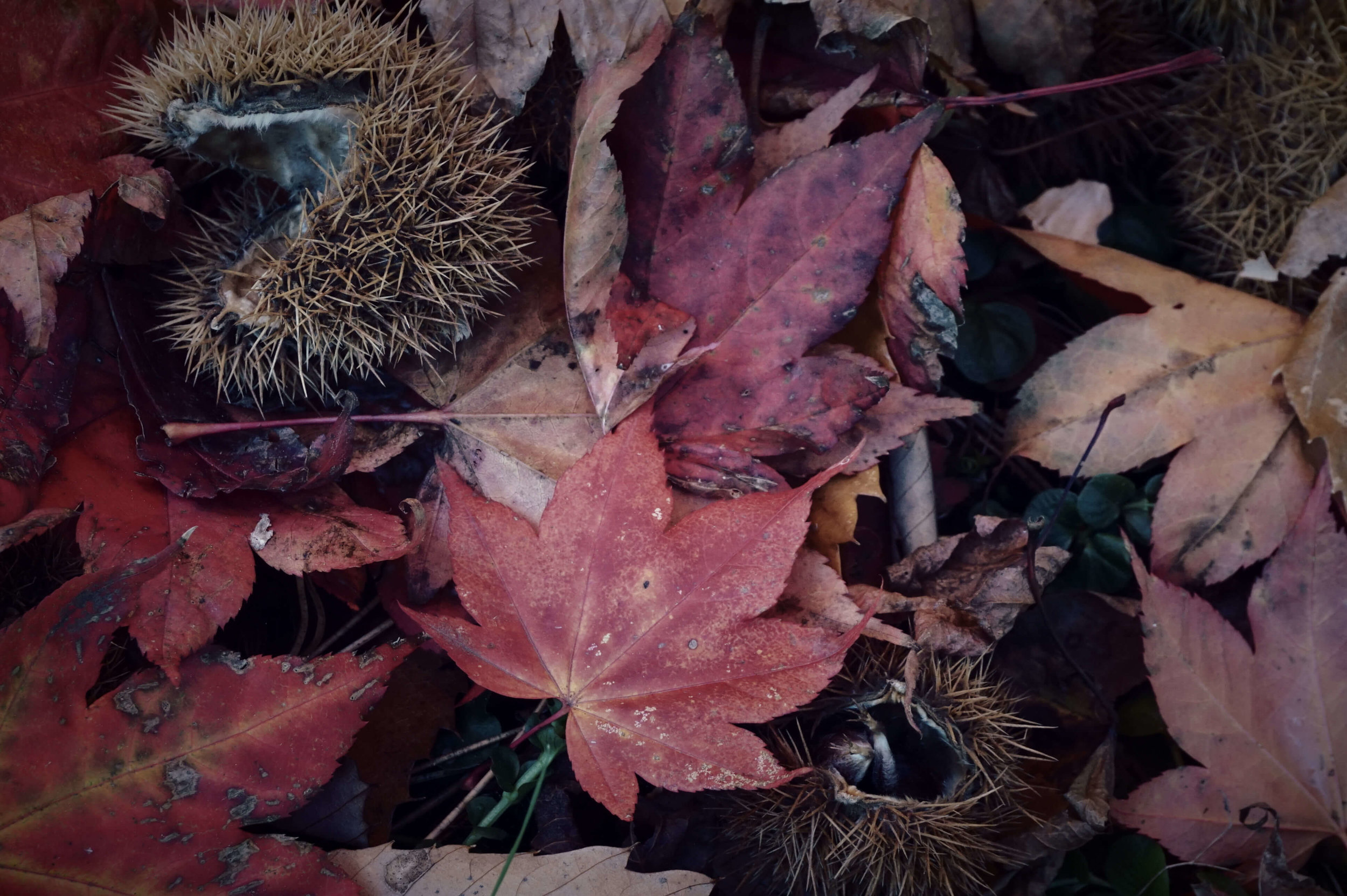 Rachel Hands - Highly Commended - Autumn Leaves