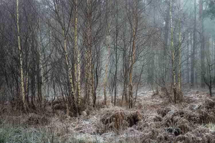 Hay Wood Solihull