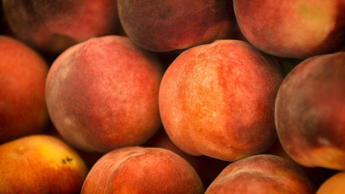 peachy-Alan-Ranger-Photography.jpg