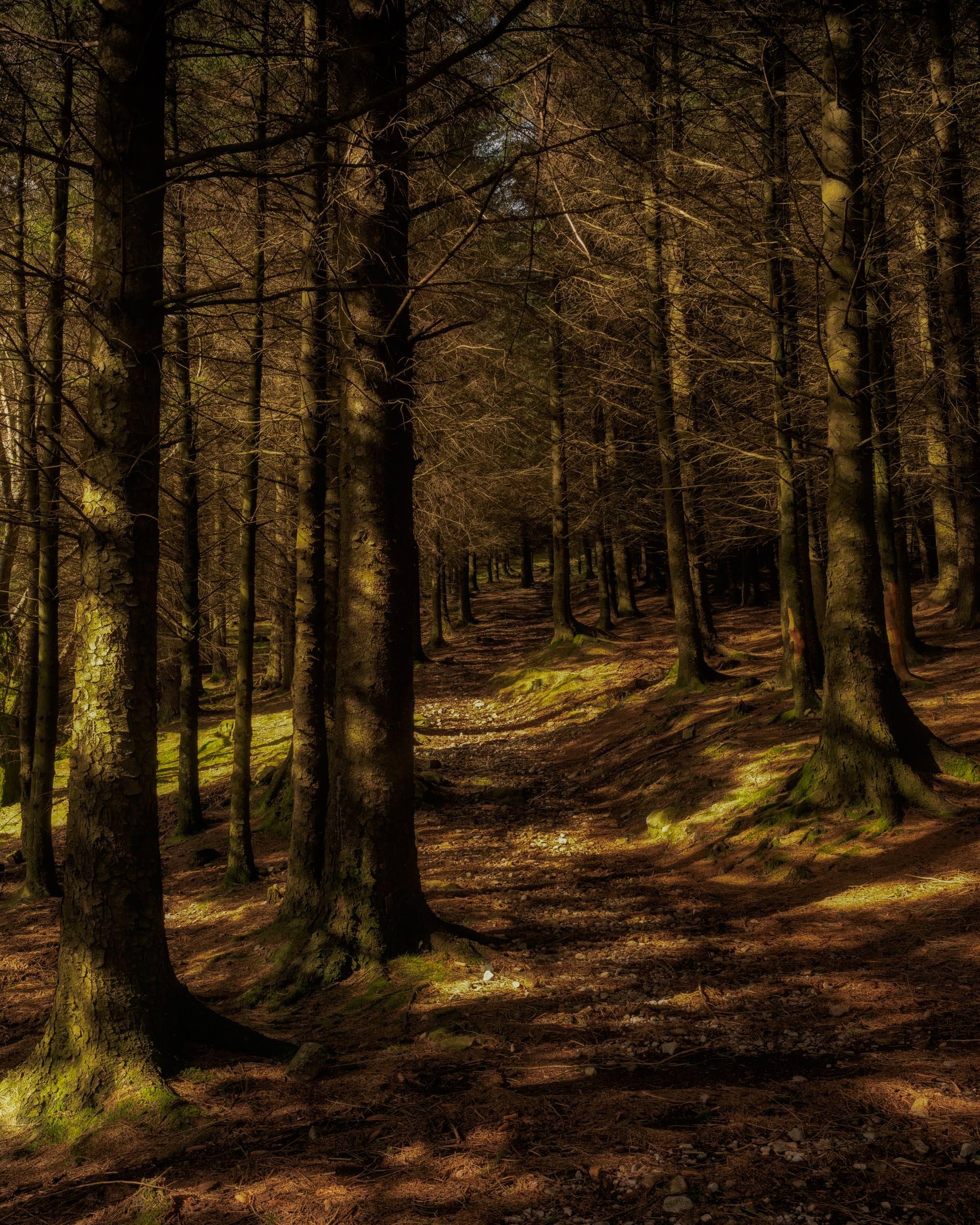 Blea Tarn Woods
