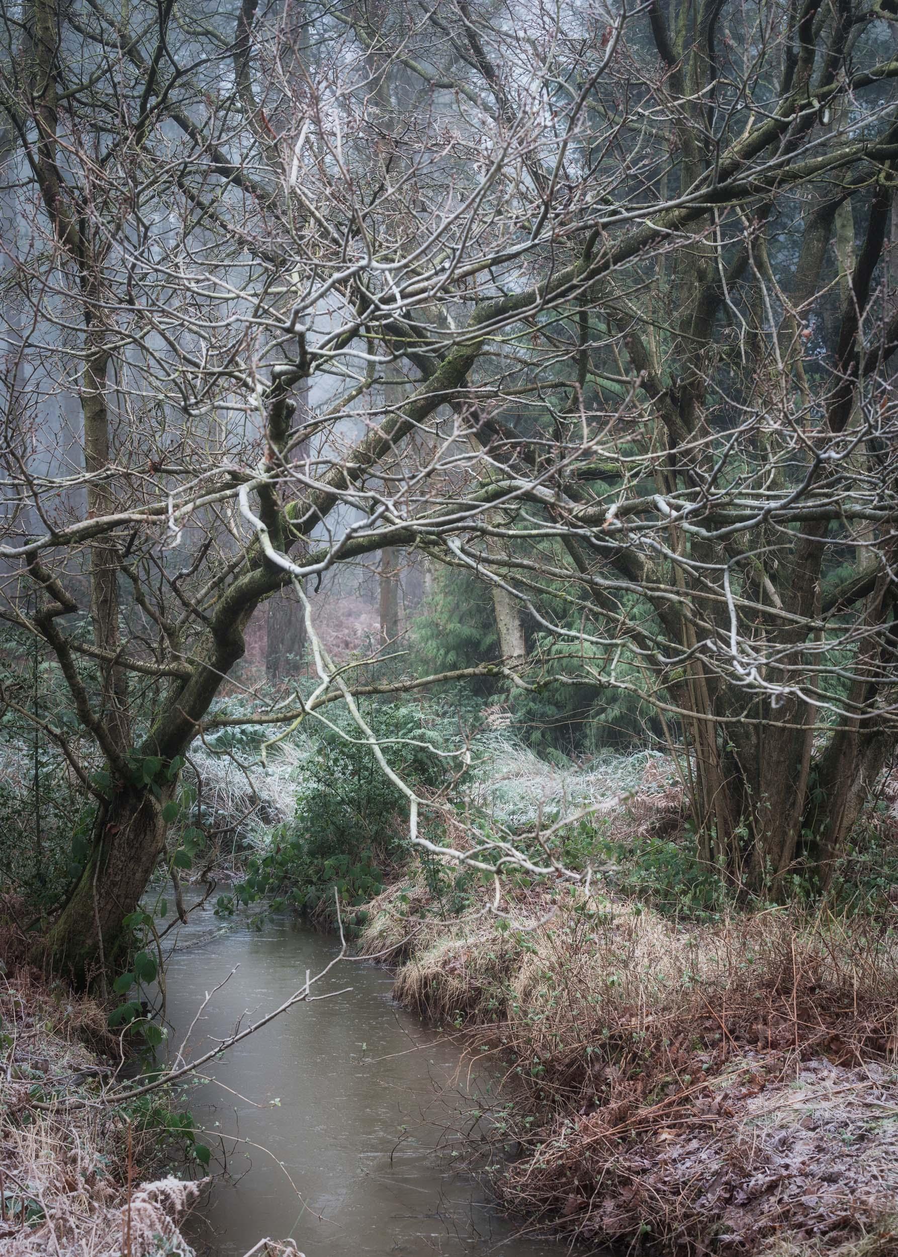 Hay Woods - 2