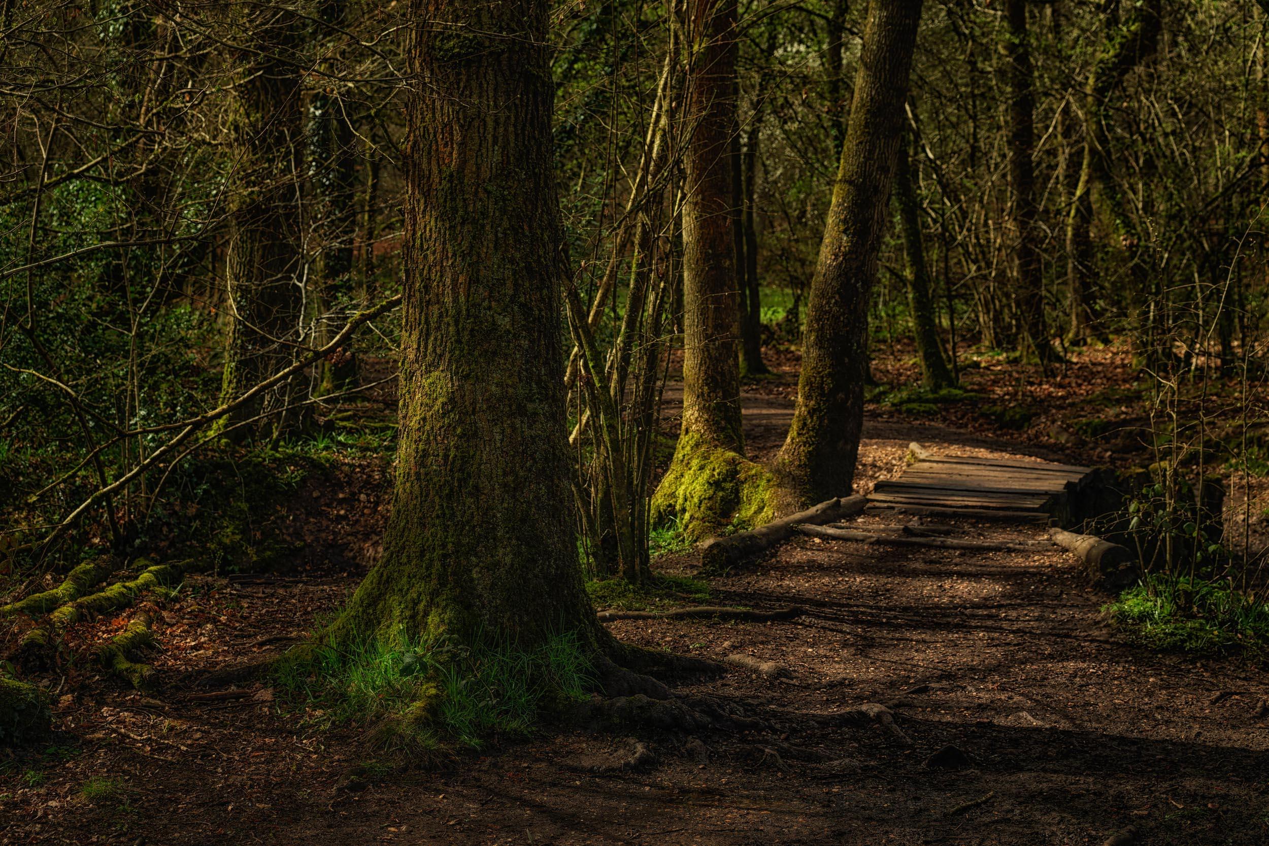 clowes wood 6