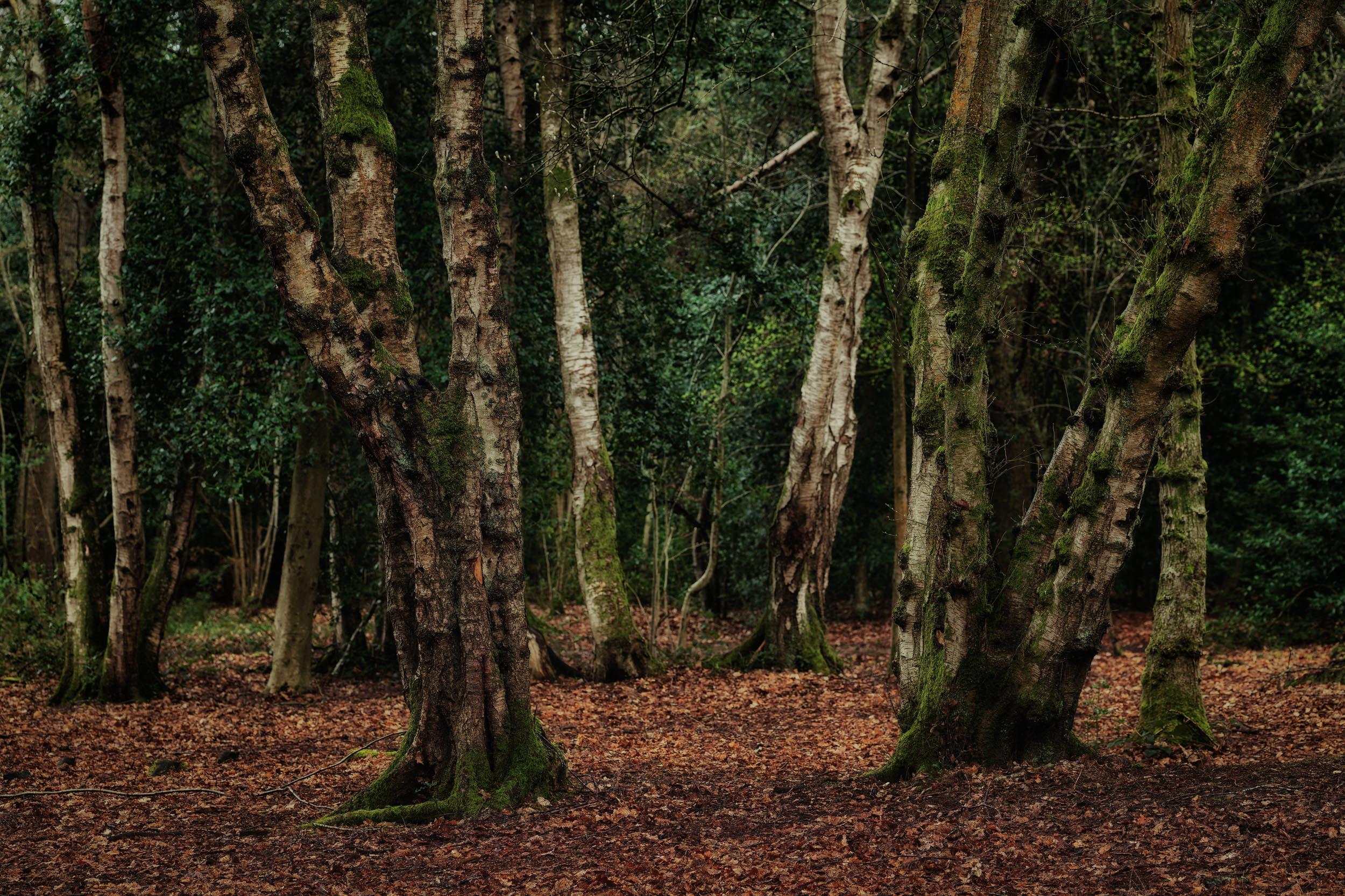clowes wood 4