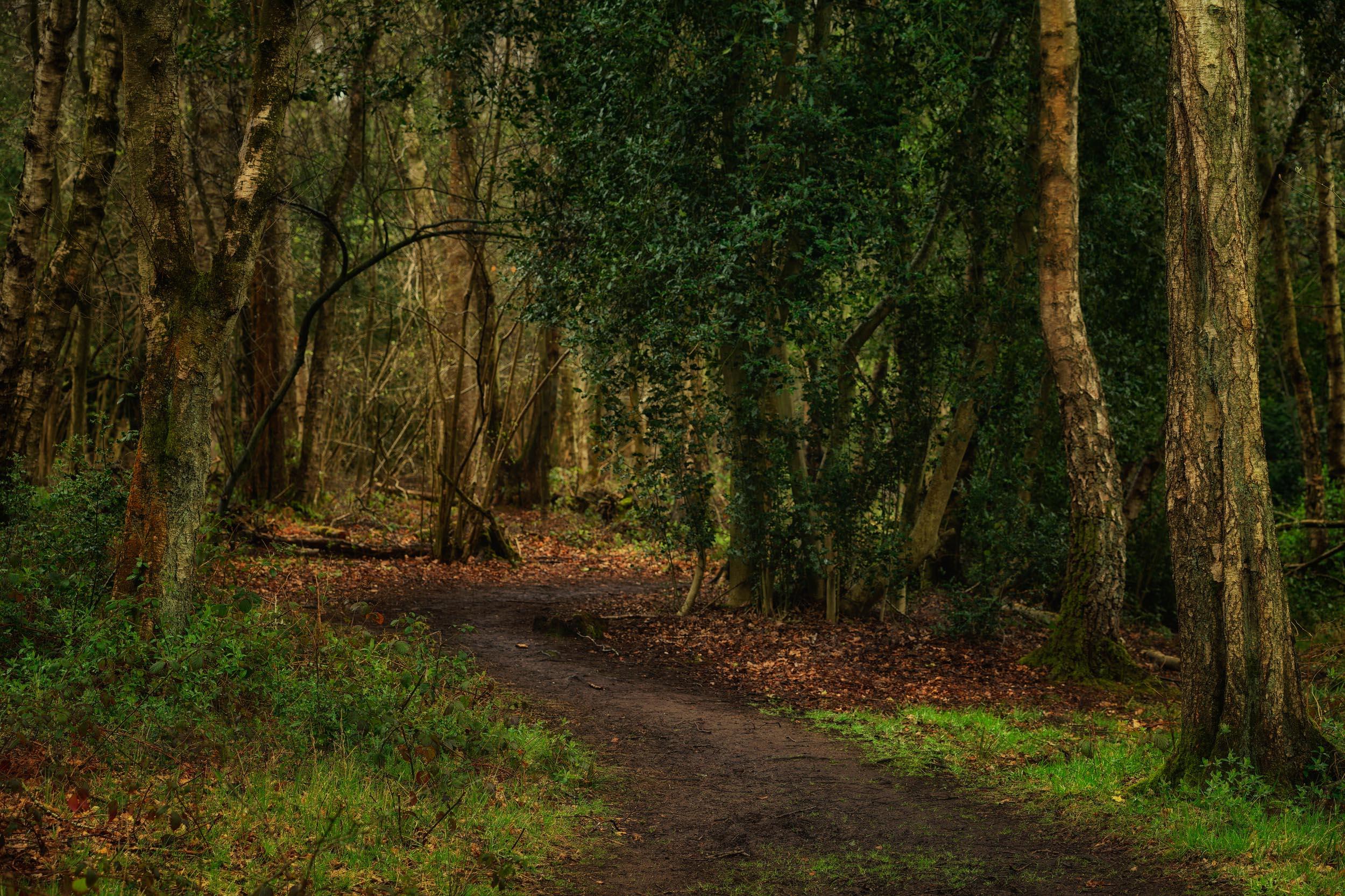 clowes wood 3