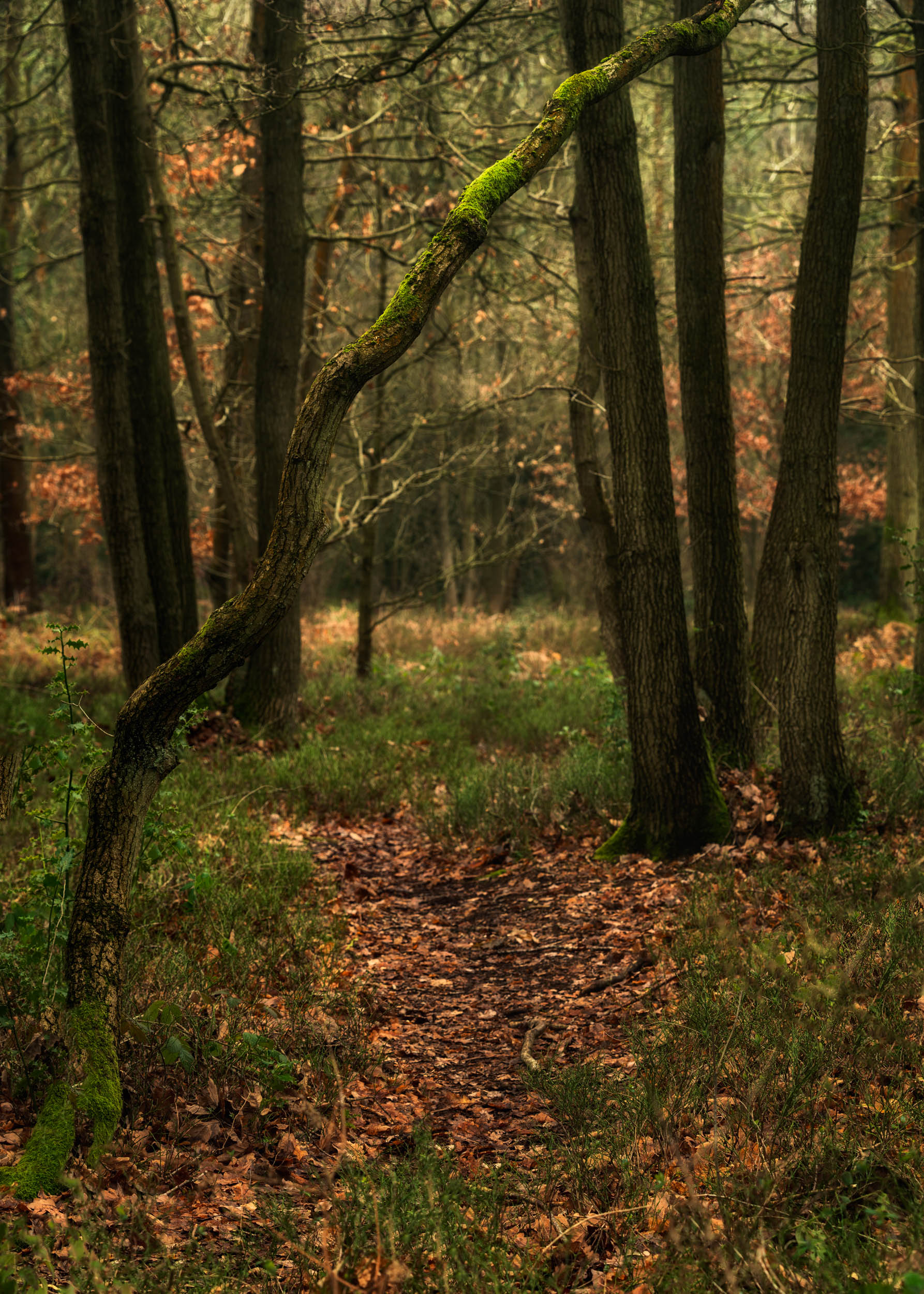 rough hill woods 5
