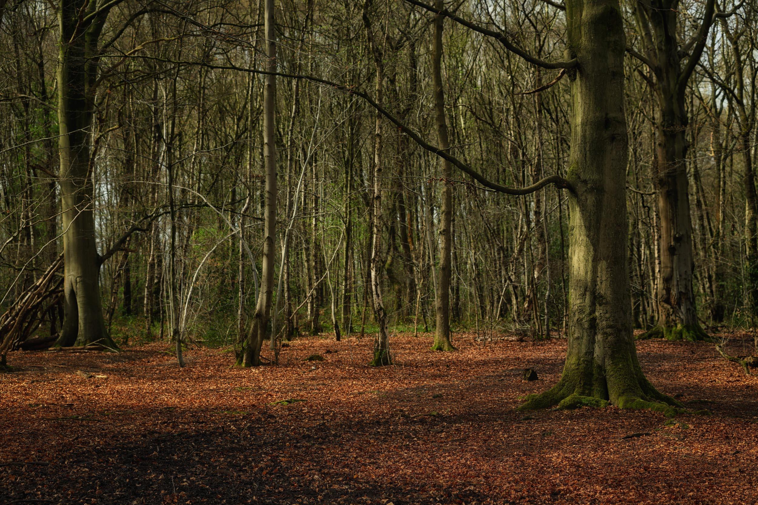 clowes wood 7