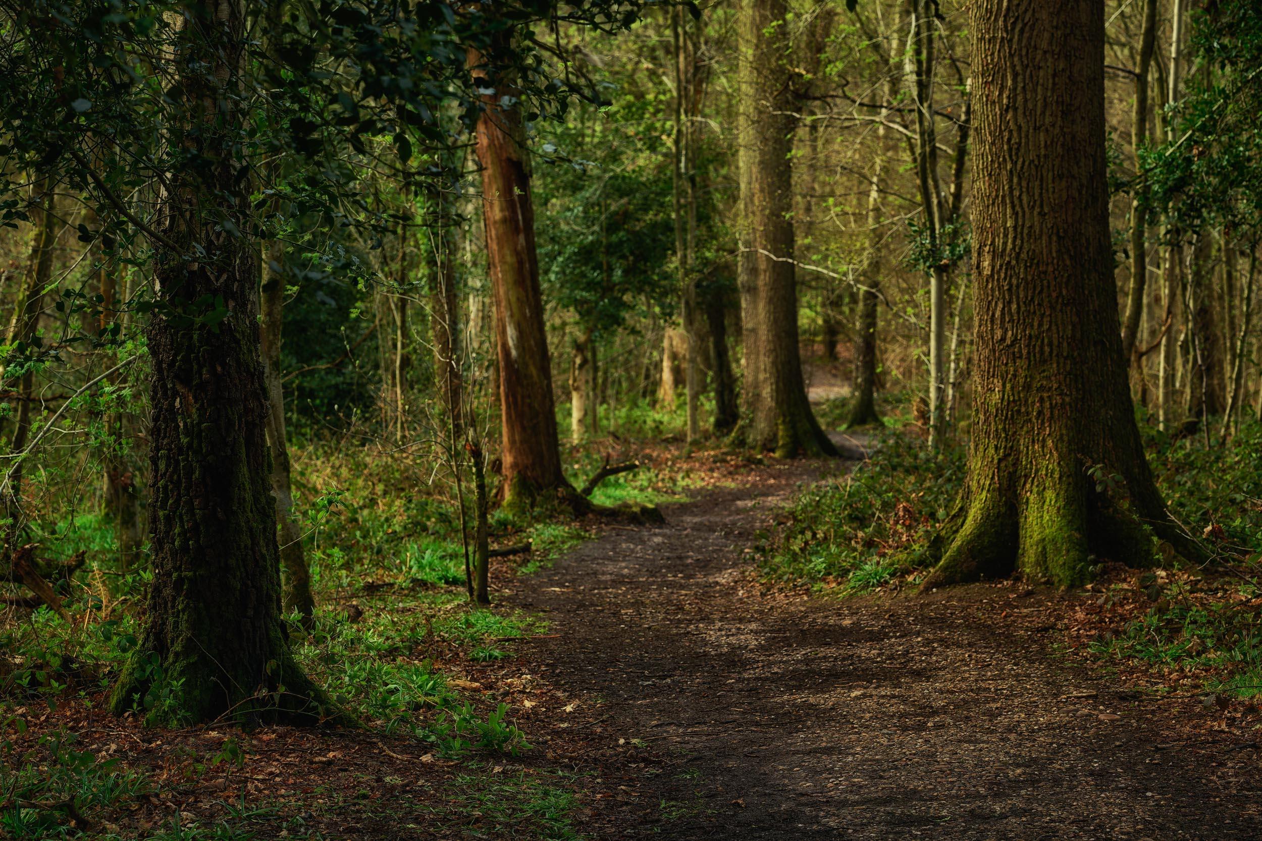 clowes wood 5