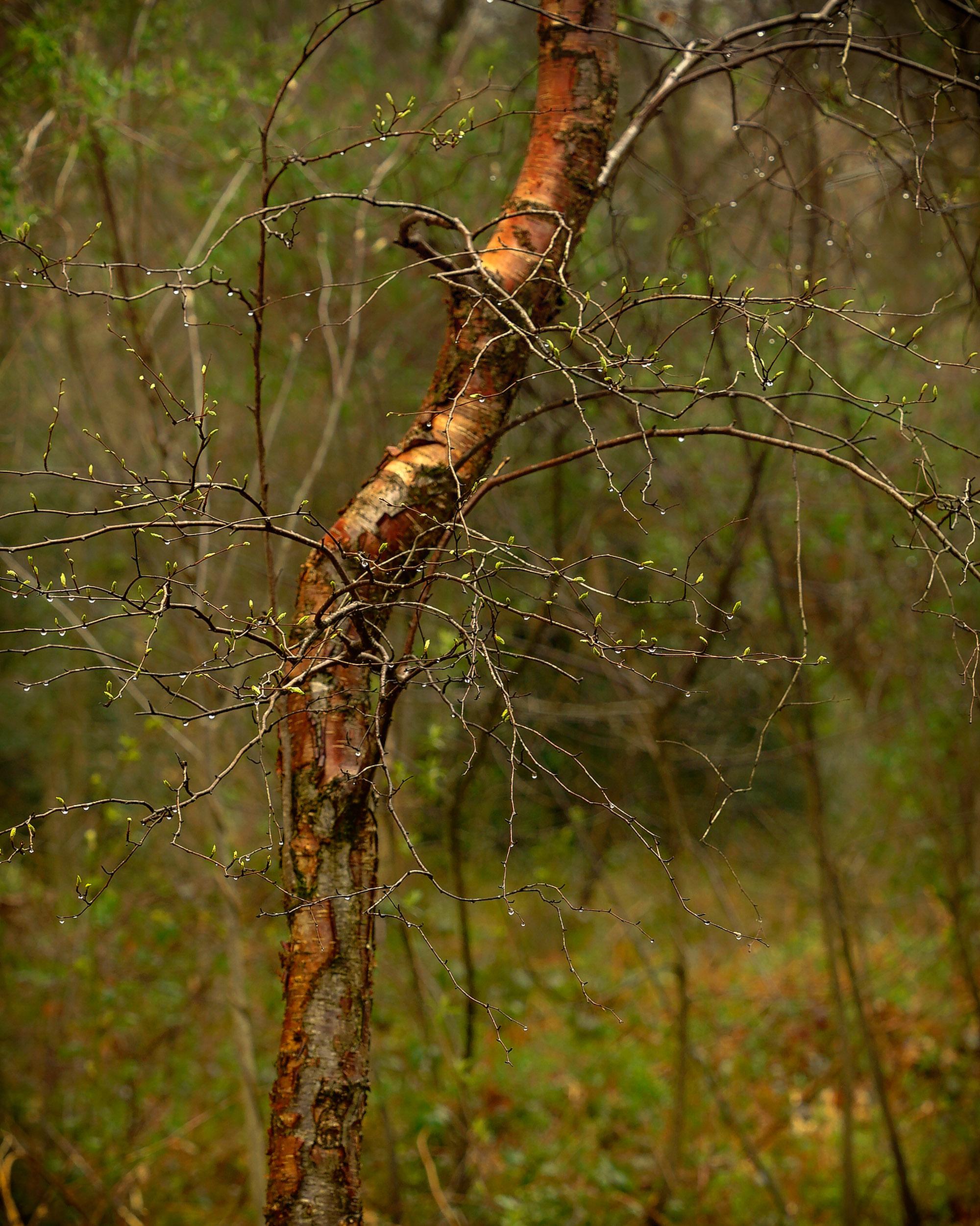 clowes wood 2