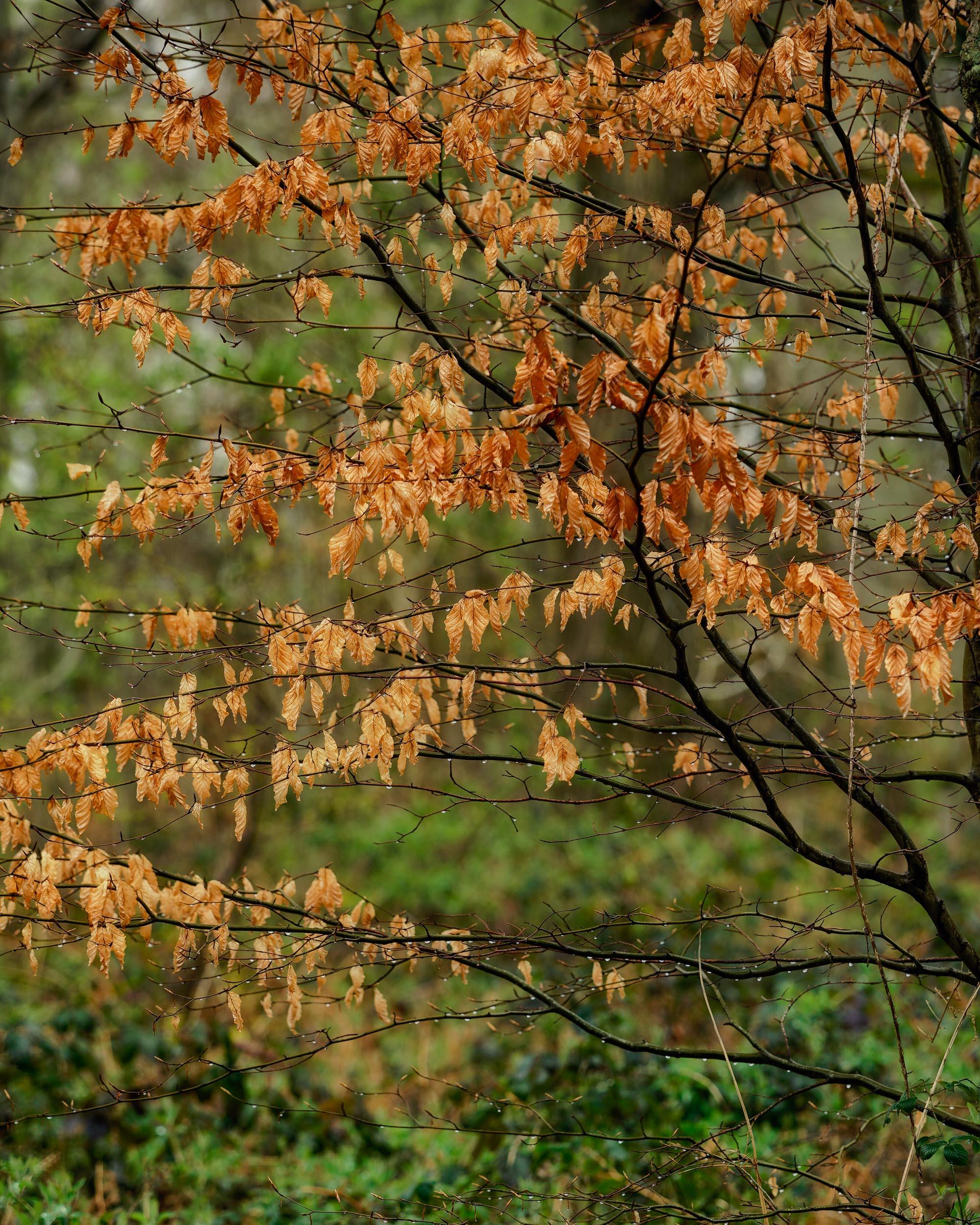 Clowes Wood 1