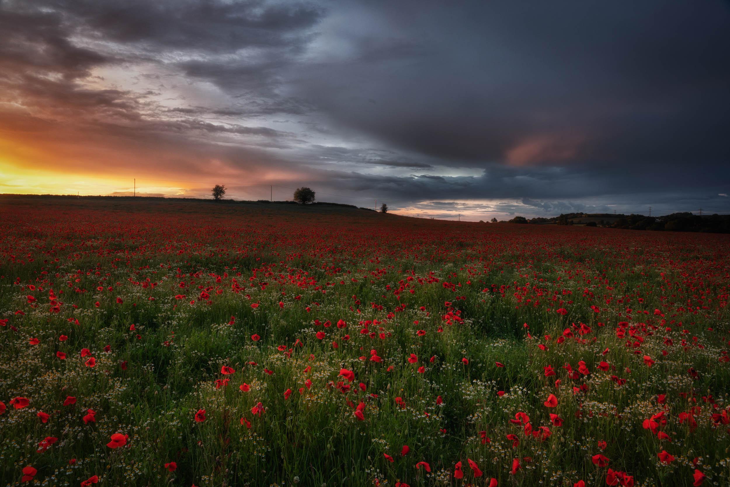 9 6 2019 - Poppy Field Sunset