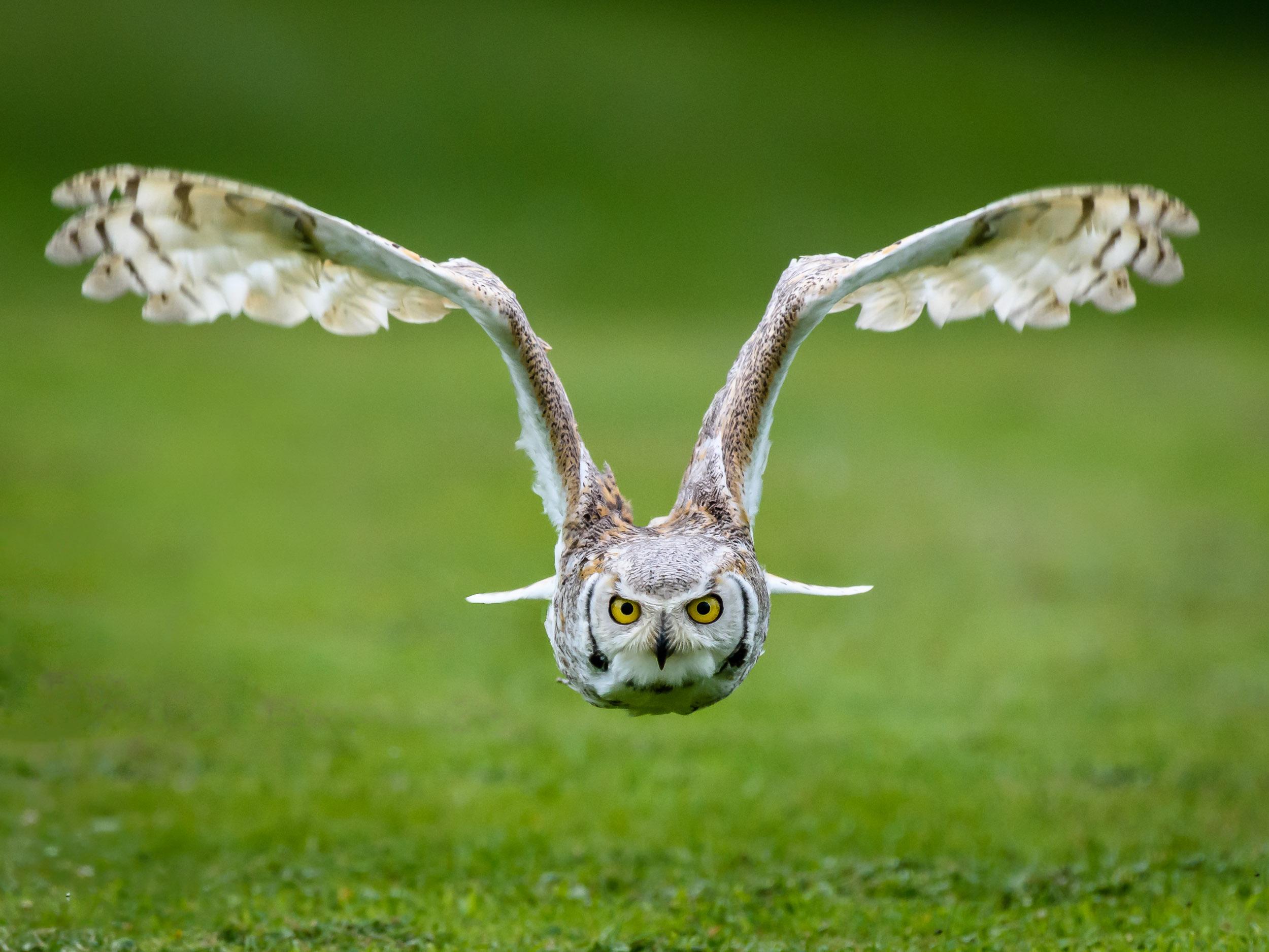 03 Newent Owl.jpg