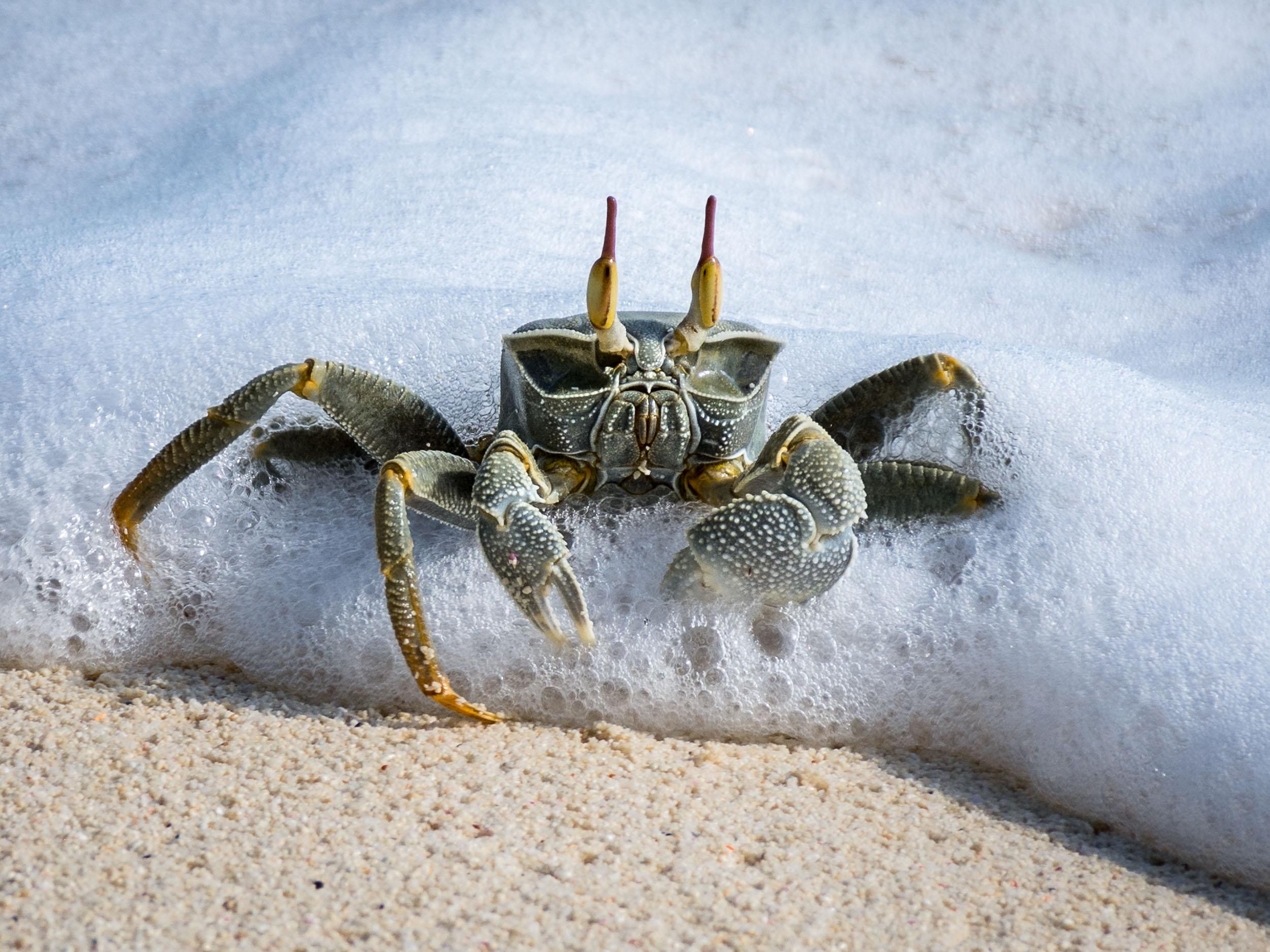 07 Denis Crab.jpg