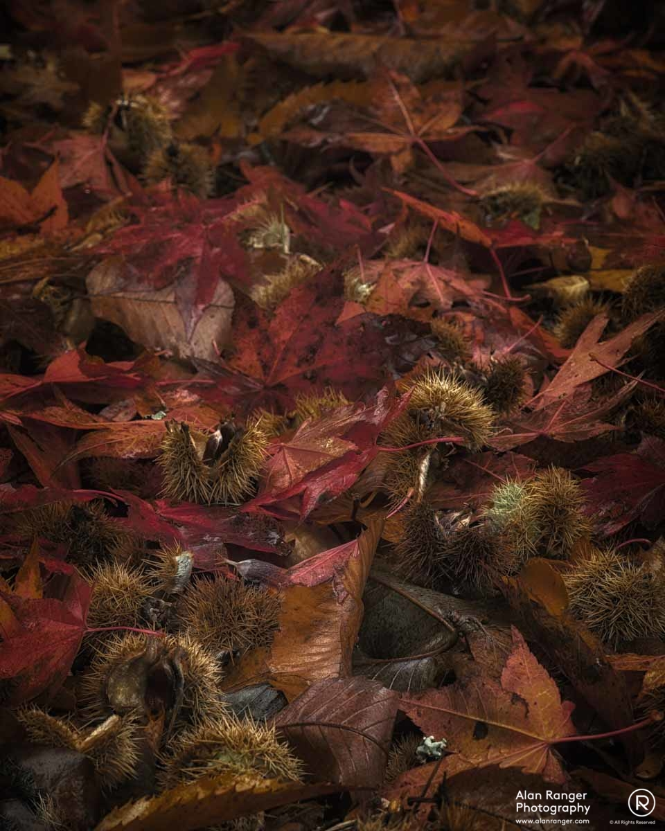 autumn litter