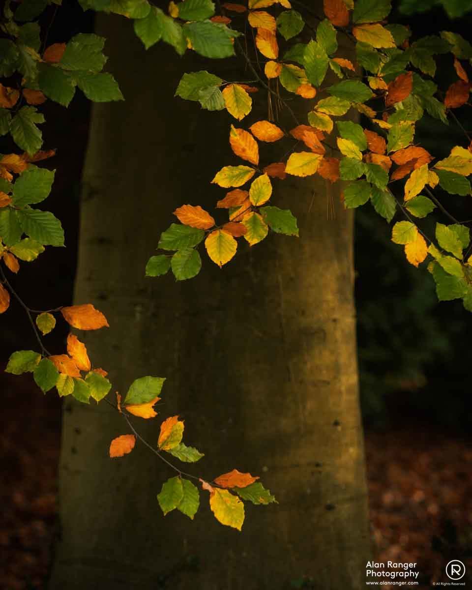 batsford autumn 8