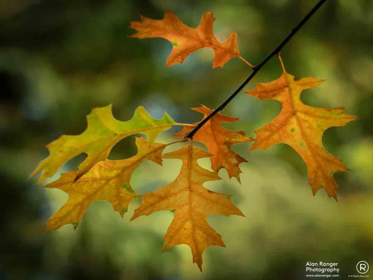 batsford autumn 7