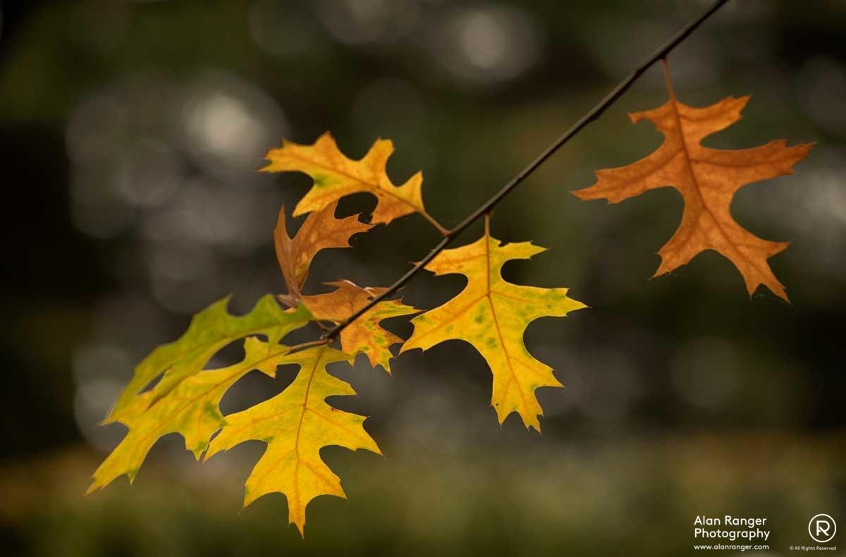 batsford autumn 4