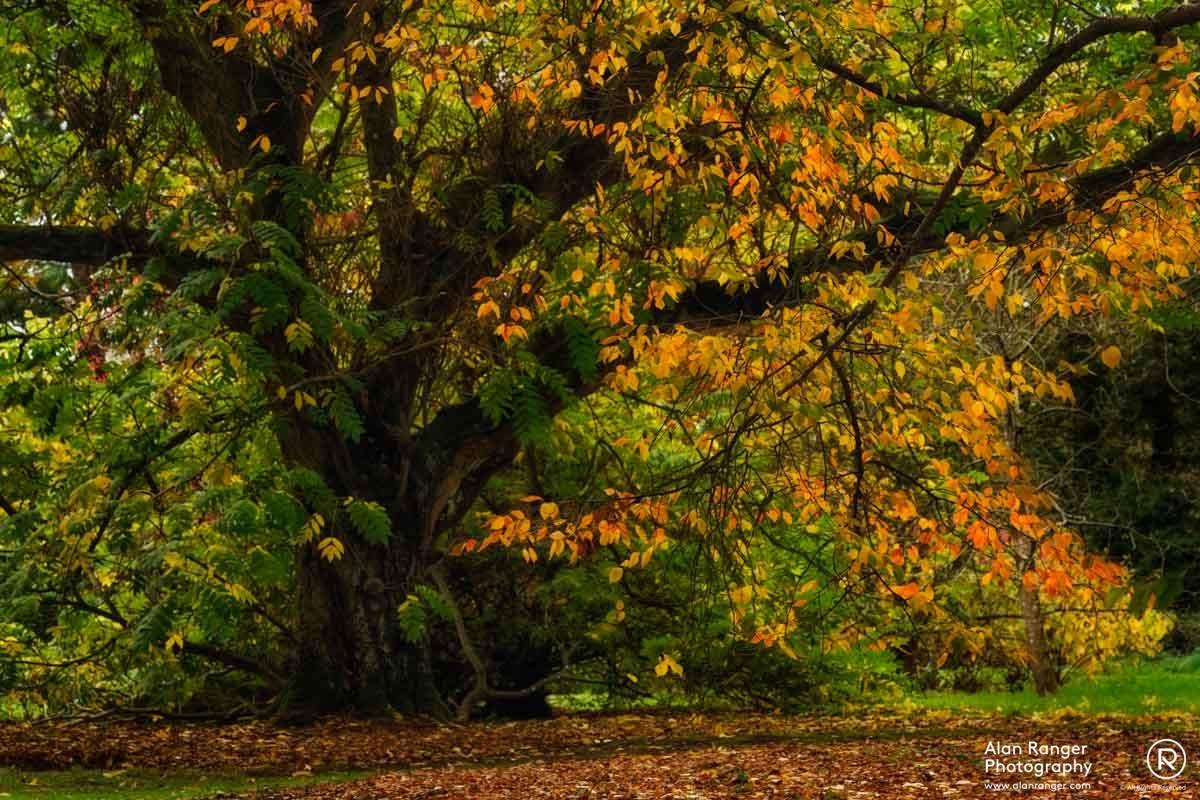 batsford canopy