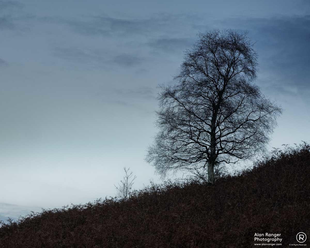grasmere birch 3