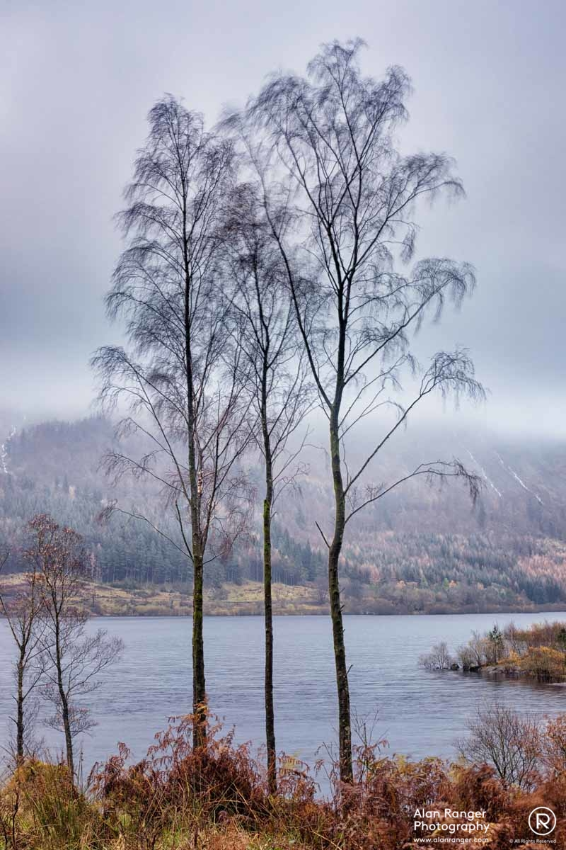 thirlmere tenderness