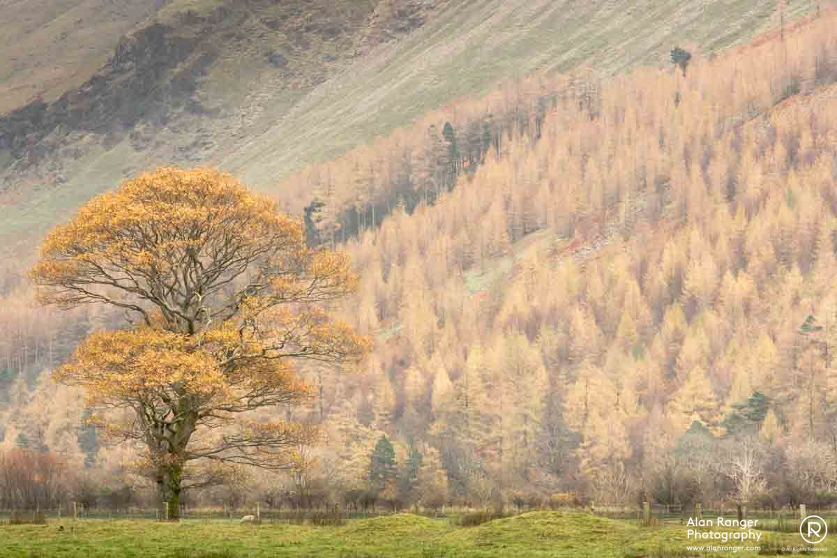 crummock autumn yellows