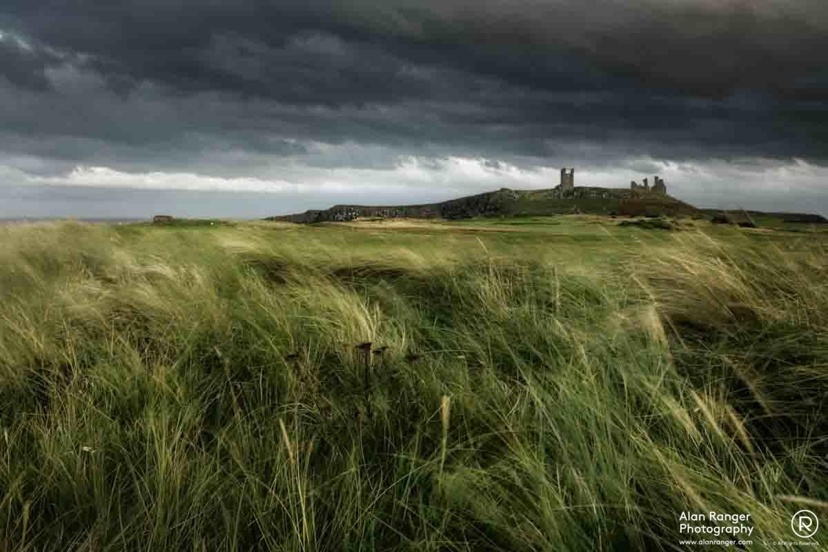 dunstanburgh grasses