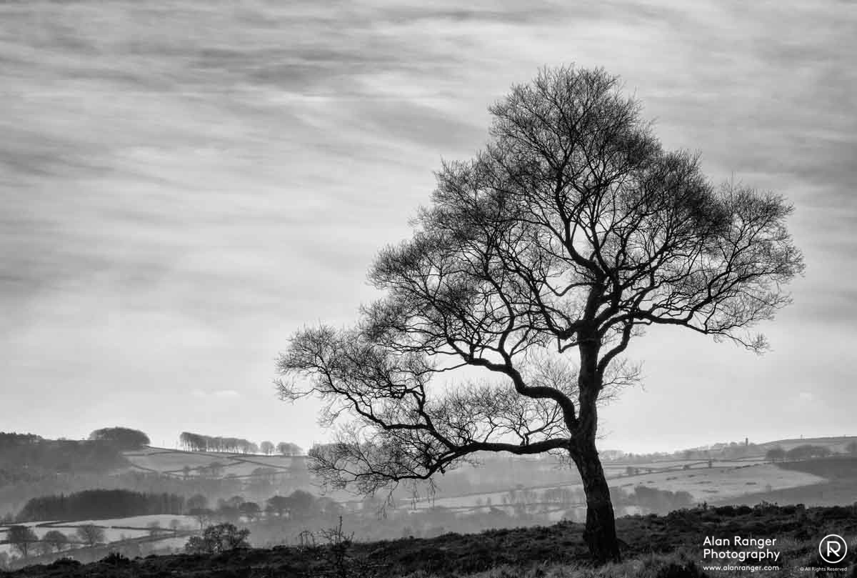 Hathersage Tree