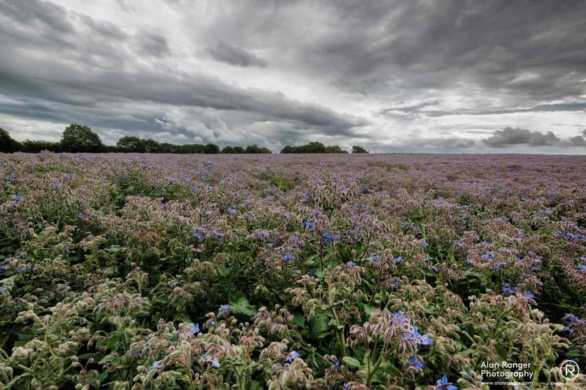 walberswick Borridge meadow