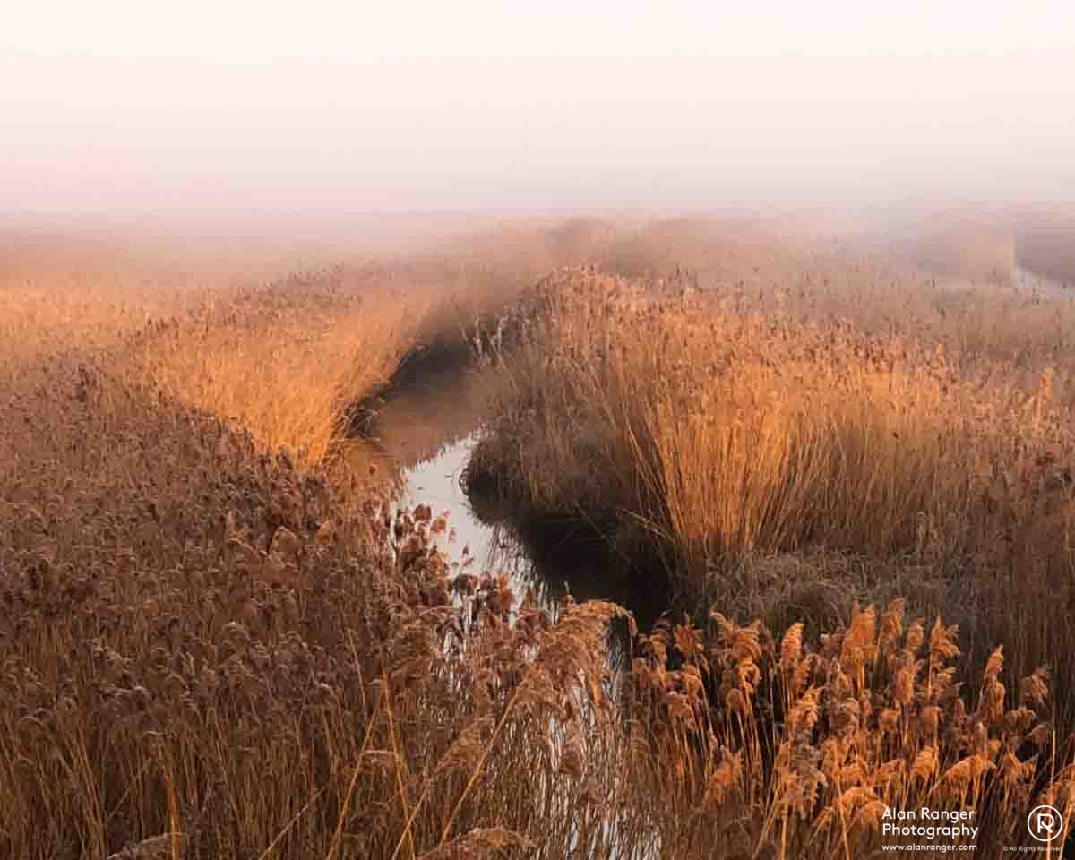 Hen reed bed (iPhone)
