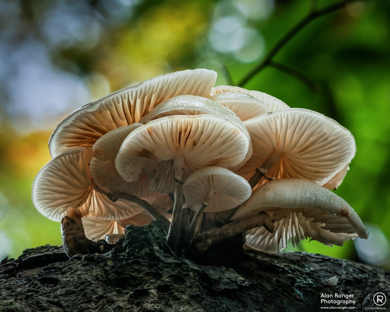 fungi on branch above head