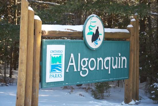 AlgonquinParkinWinter.jpg