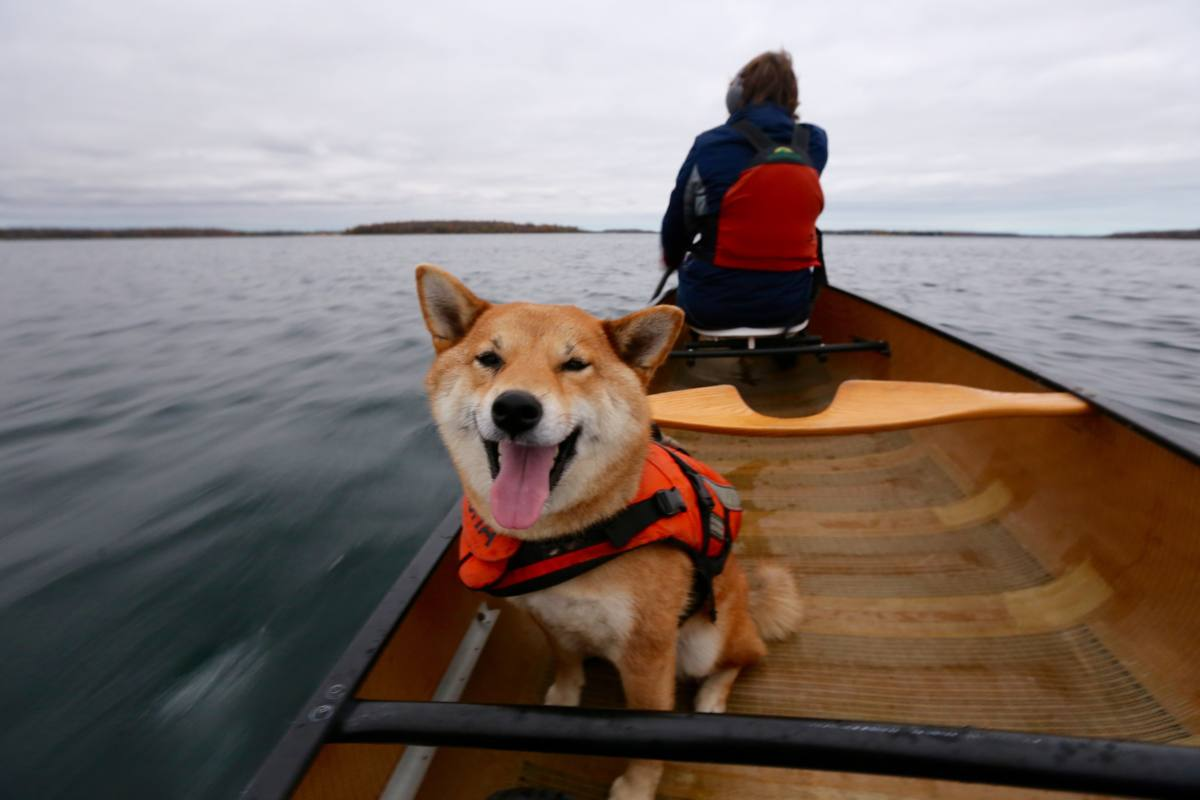 Dean Ducas - Happy to Be Paddling on the St. Lawrence River