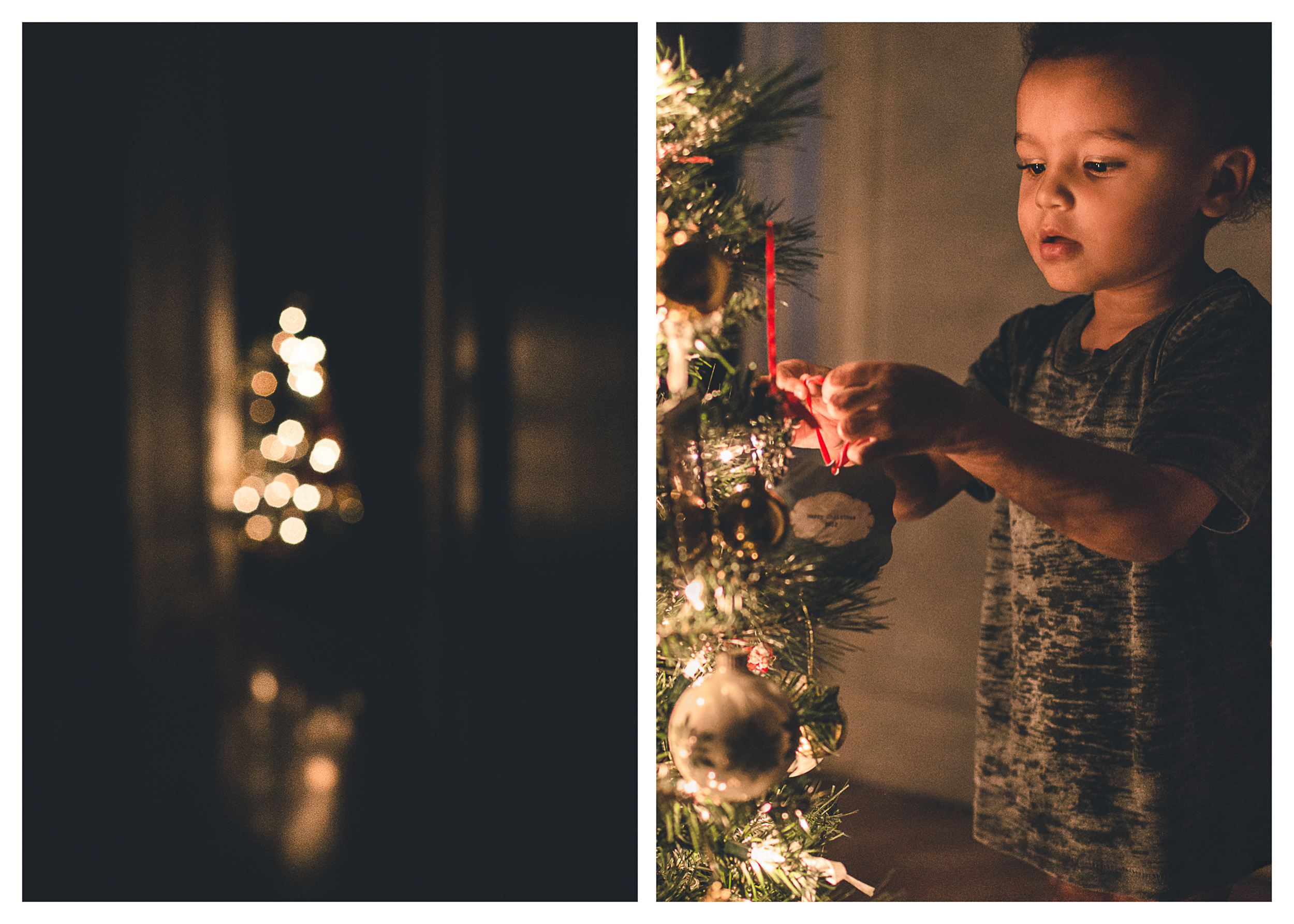 Small tree, little boy wonder