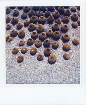 Polaroid_SX70_06_Cactus.jpg