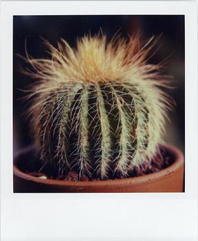 Polaroid_SX70_16_Cactus.jpg