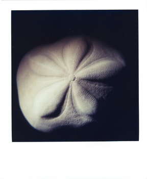 Polaroid_SX70_28_Shell.jpg