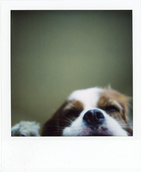 Polaroid_SX70_600_3_1.jpg.jpg